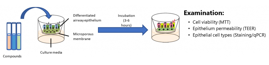 Experimental design for drug testing using nasal/bronchial models